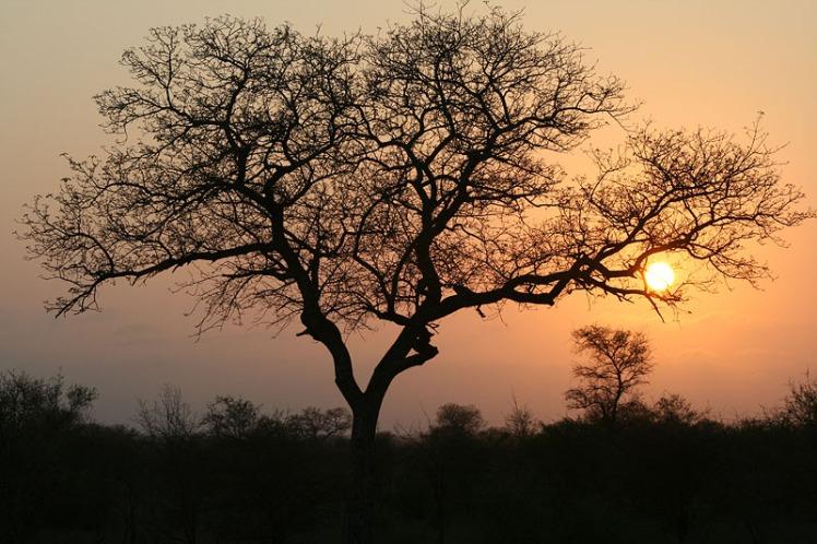 Thornhill safari lodge accomodation, Kruger national park