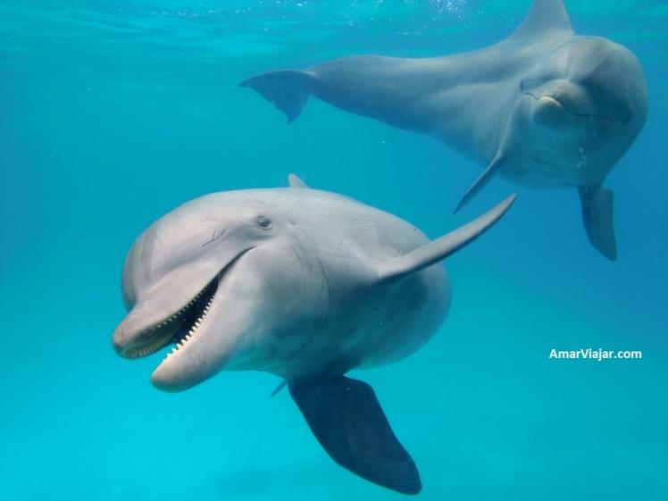 mundo-marino-delfines