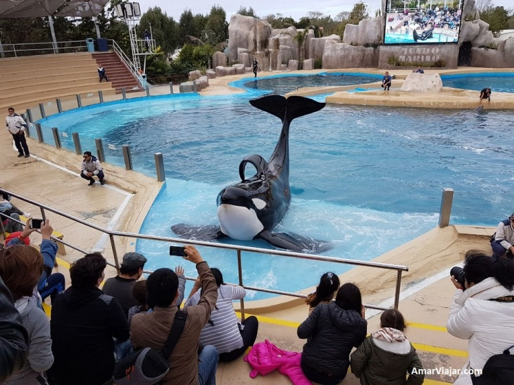 mundo-marino-orca