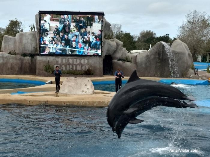 mundo-marino-orcas