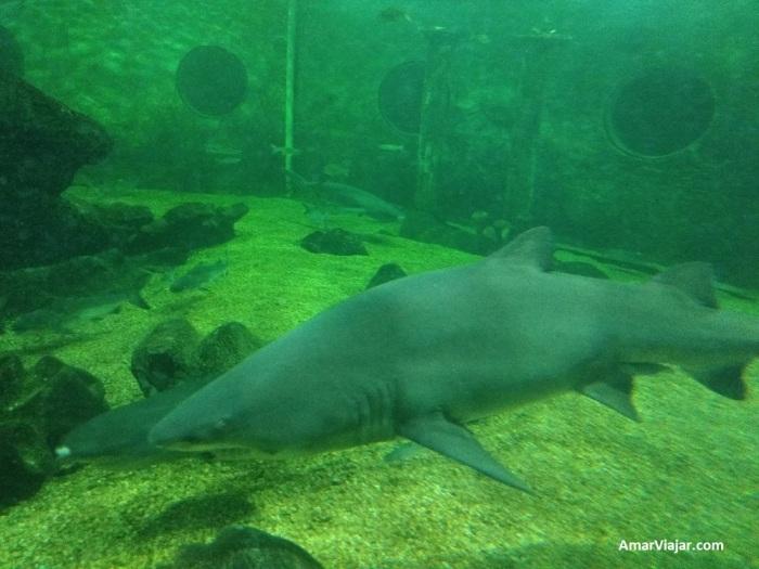 mundo-marino-tiburones