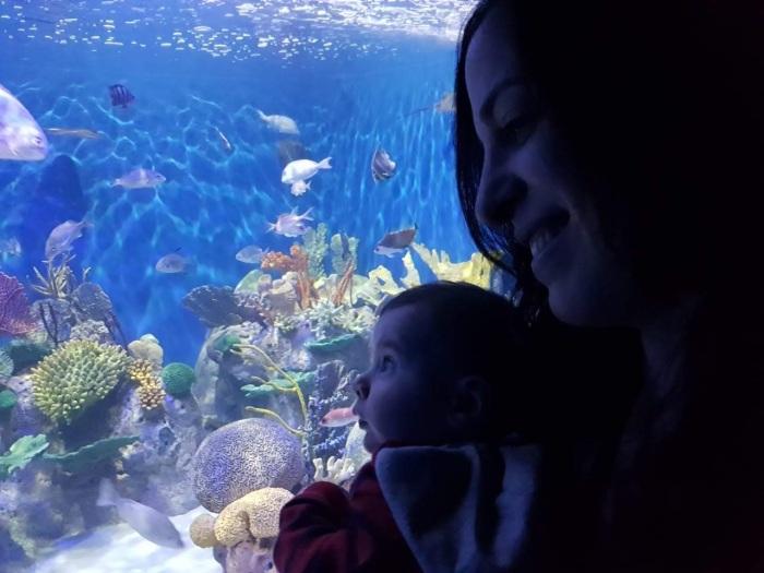 brasil-rio-de-janeiro-aquario-2