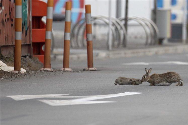 conejos-calle-nueva-zelanda-coronavirus-amarviajarblog