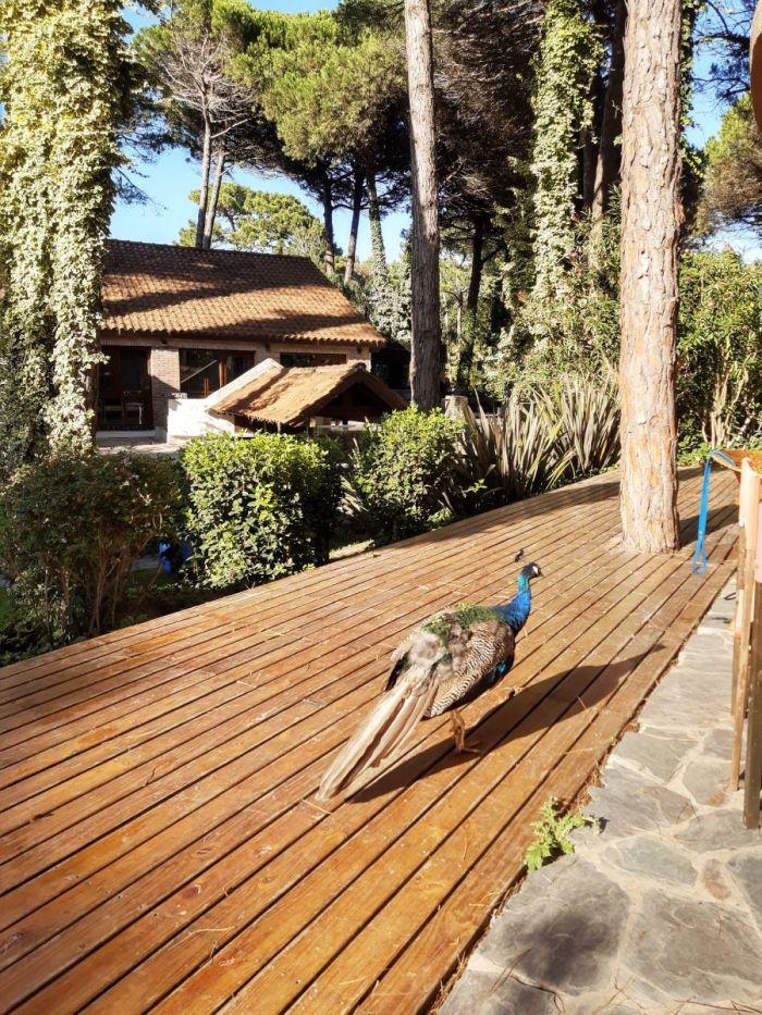 hotel-argentina-carilo-village-coronavirus-amarviajarblog9